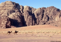 Desert wadi run 16