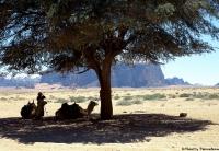 Desert wadi run