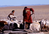 Mongolie-berger