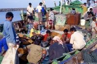 Pêcheurs à Hodeida 2